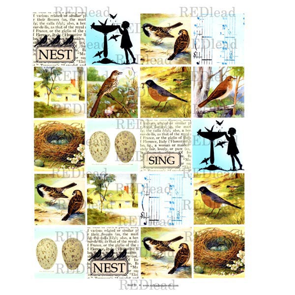 Bird Collage Sheet 20