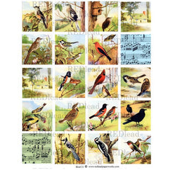 Bird Collage Sheet 21