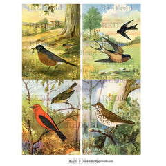 Bird Collage Sheet 31