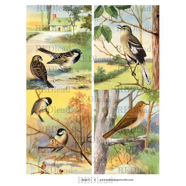 Bird Collage Sheet 32