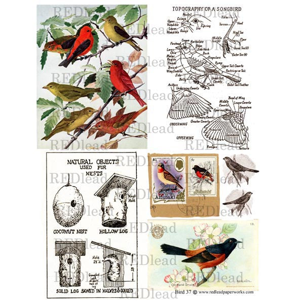 Bird Collage Sheet 37
