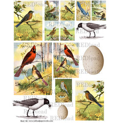 Bird Collage Sheet 3