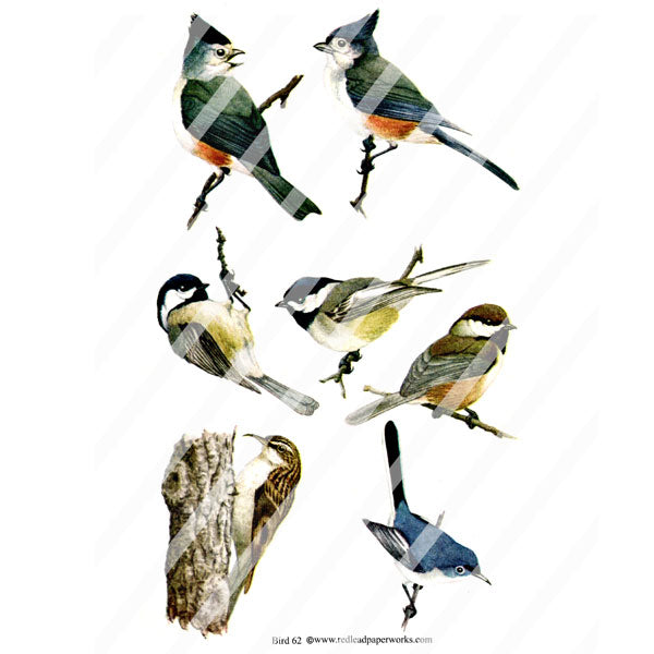 Bird Collage Sheet 62