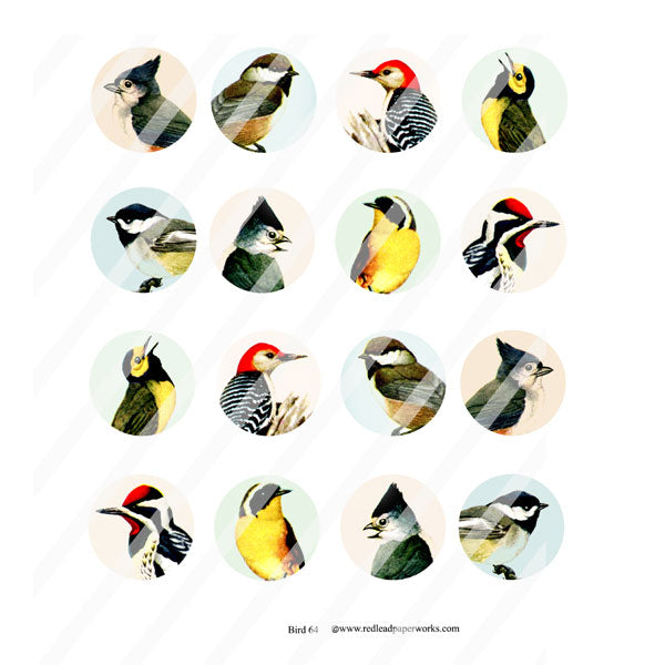 Bird Collage Sheet 64