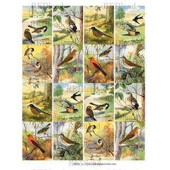 Bird Collage Sheet 6