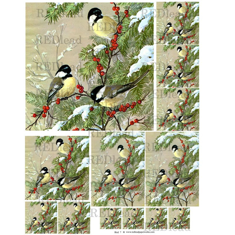 beautiful bird collage sheet