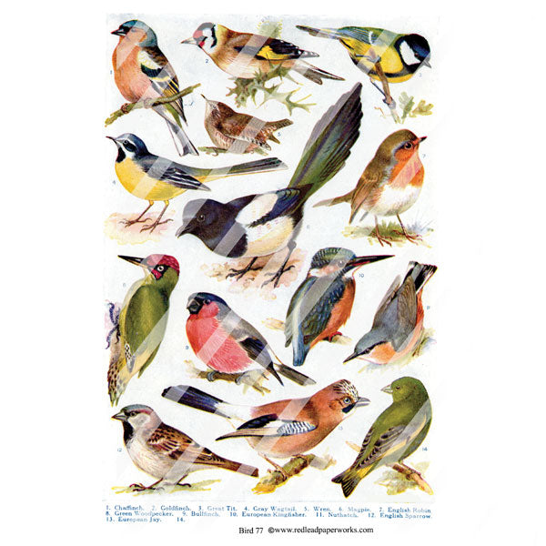 vintage bird collage sheet