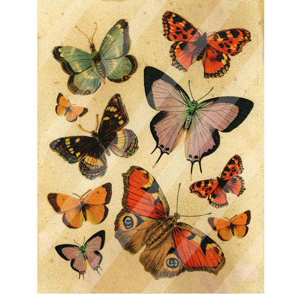 Antique Style Butterfly Flutter Paper Print