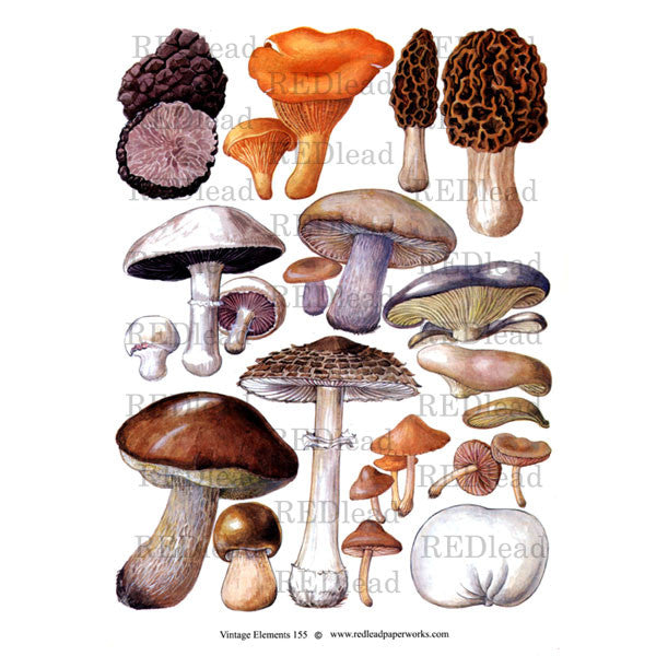 Vintage Elements Mushrooms 155 Collage Sheet