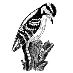 woodpecker bird rubber stamp