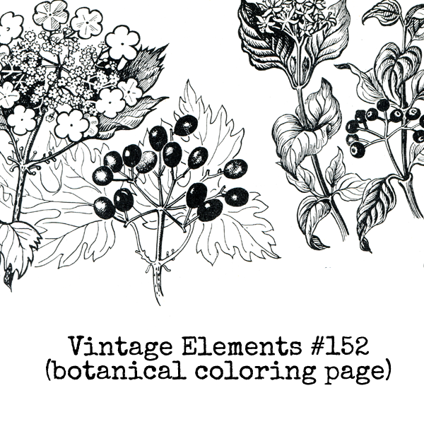Vintage Elements 152 Coloring Page Collage Sheet