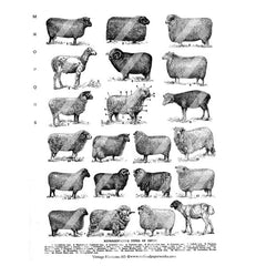 vintage sheep collage sheet
