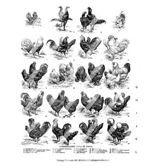 hens and roosters collage sheet