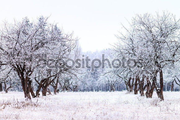 Frosty Apple Tree Winter Garden  Backdrop