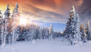 Christmas Snowy Winter Trees Print Photography Backdrop