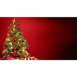 Majestic Red Photography Christmas Print Photography Backdrop