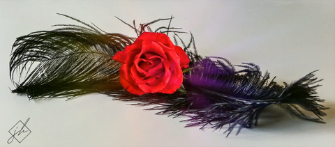 Rose Feather