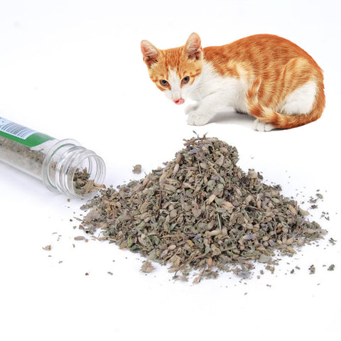 40ml Organic Cat Natural Catnip Interactive Pet Cat Treats Toy Cat Mint Snacks Kitten Menthol Flavor Training Tools for Cats