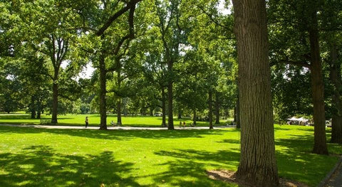 Park green space
