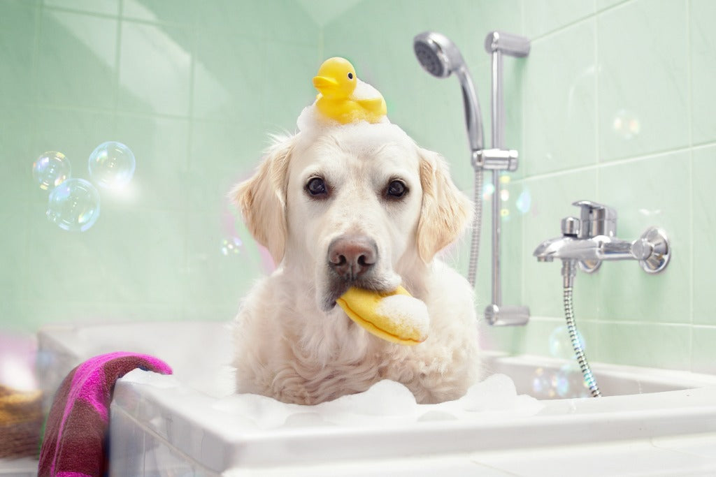 Using Baby Shampoo on Dogs