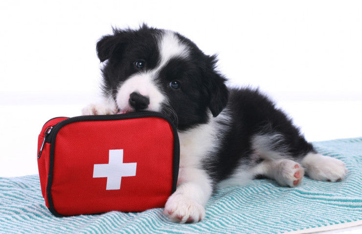 First-Aid Tips For Dog Owners