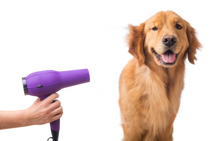10 Dog Grooming Tips To Use At Home