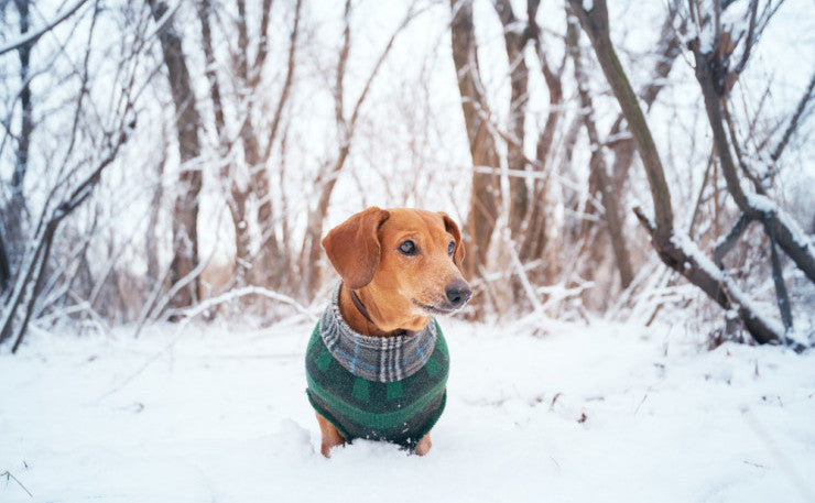 Does My Dog Need A Winter Coat?