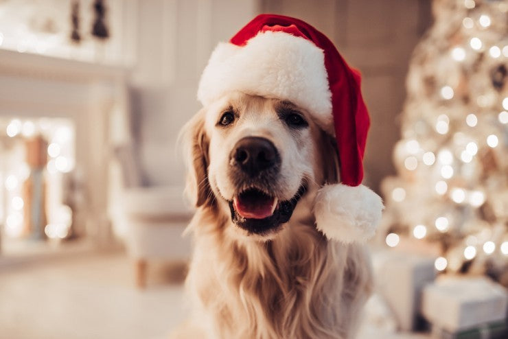 Holiday Gift Ideas for a Dog Groomer