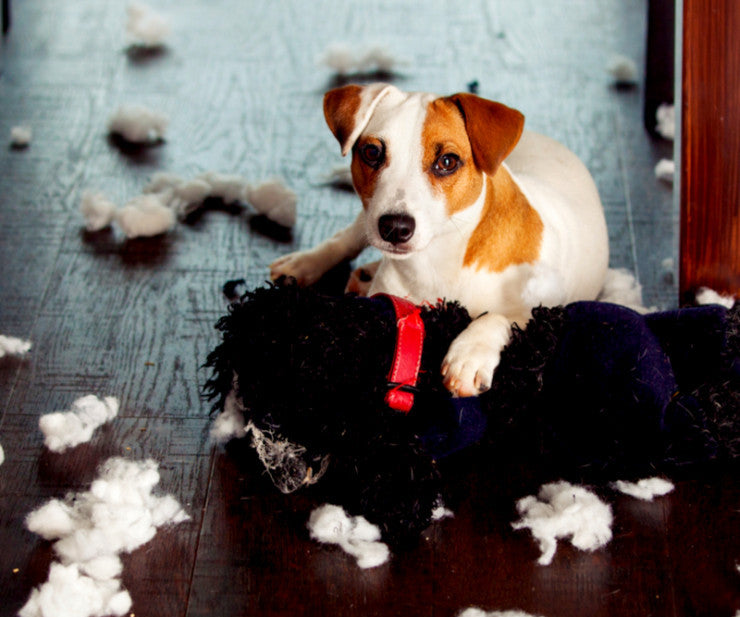 Could Your Dog's Destructive Behavior Be Due To Boredom?
