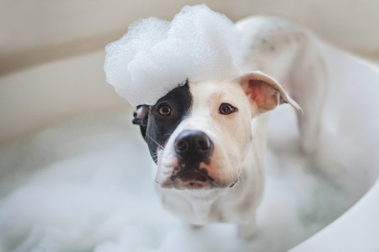 Why Are Dogs So Happy After a Bath?