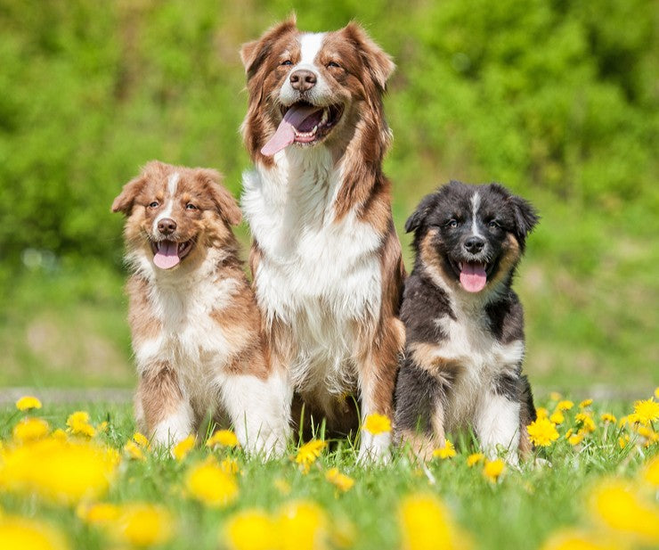 5 Ways To Prepare Your Dog For Spring