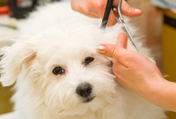 Top Grooming Supplies Every Professional Groomer Needs