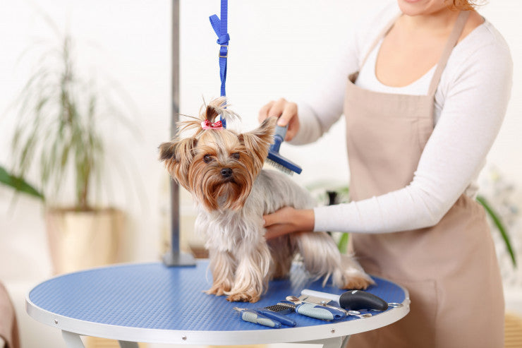 Creating The Best Dog Grooming Kit