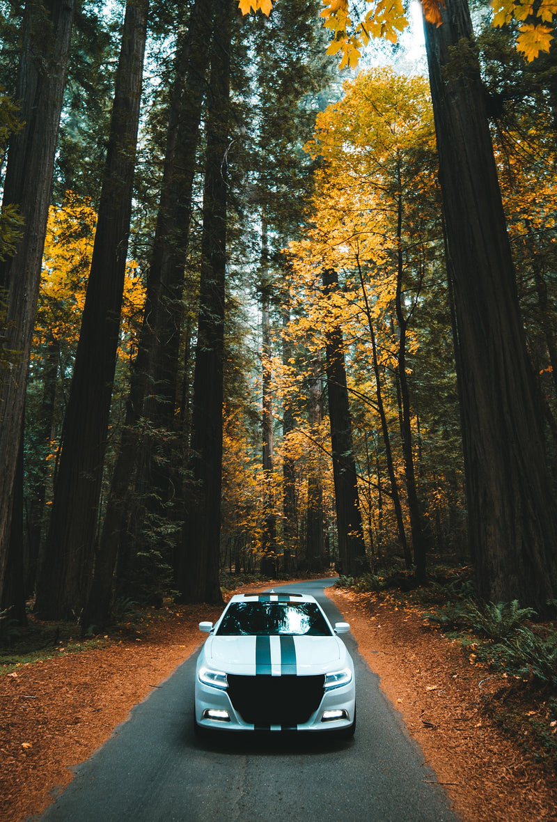 CHARGING THROUGH THE WOODS