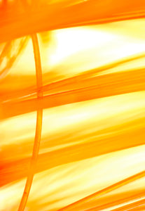 Oranges and yellows create stripes from left to right on the bright white background. A single strand of orange curves from top to bottom.