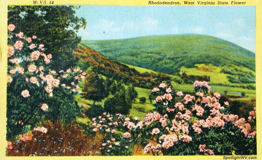 Vintage West Virginia Postcard of the State Flower, Michelle's December '17 Playlist