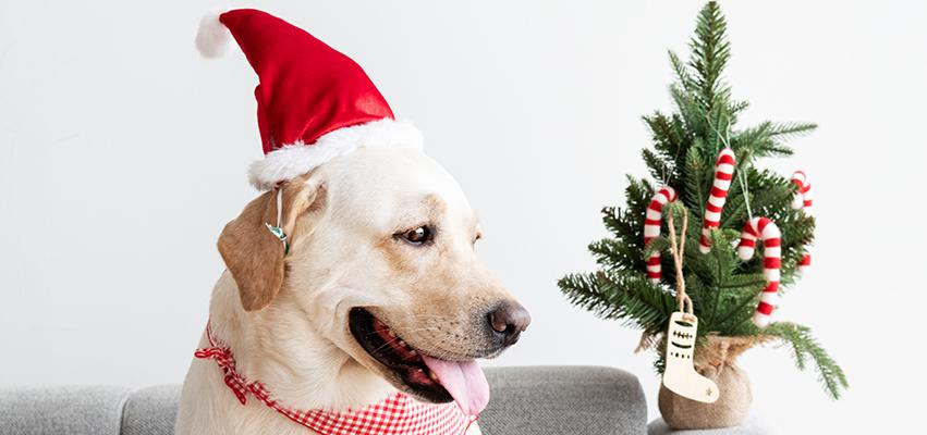 Holiday Gift Guide for Dogs & Cats - 2020