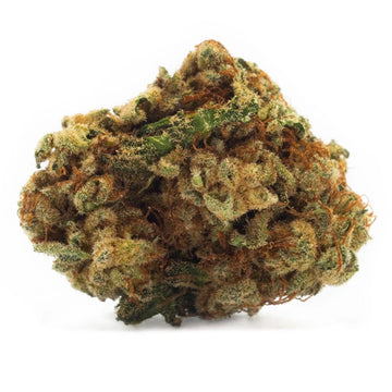 Dried Cannabis - MB - Houseplant Sativa Flower - Grams: