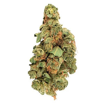 Dried Cannabis - MB - Daily Special Sativa Flower - Grams:
