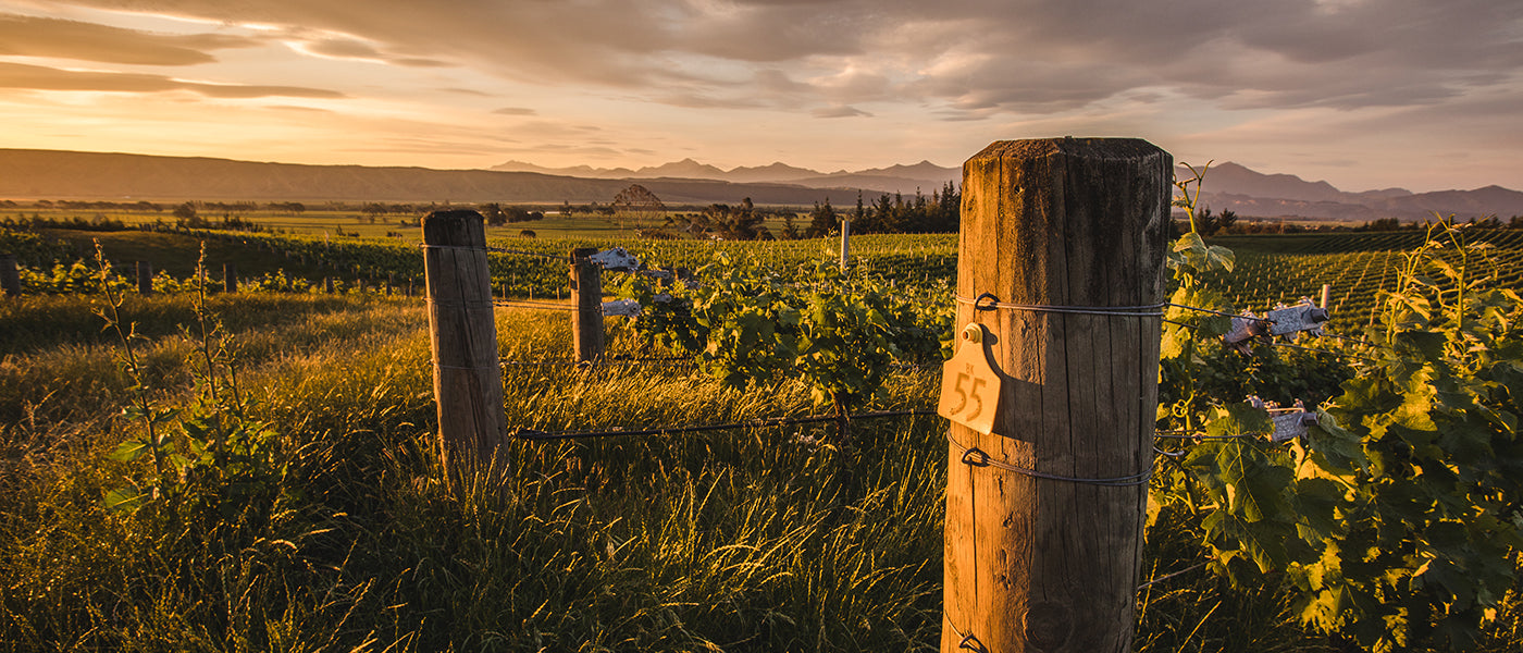 Churton Wines in Marlborough, New Zealand