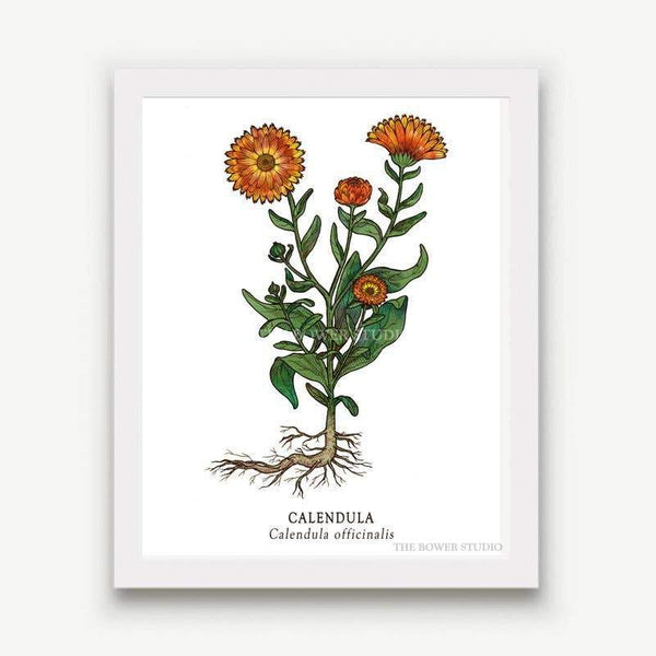 "Botanical Print (8"" x 10"") - Calendula - The Bower Studio -Freehand Market"