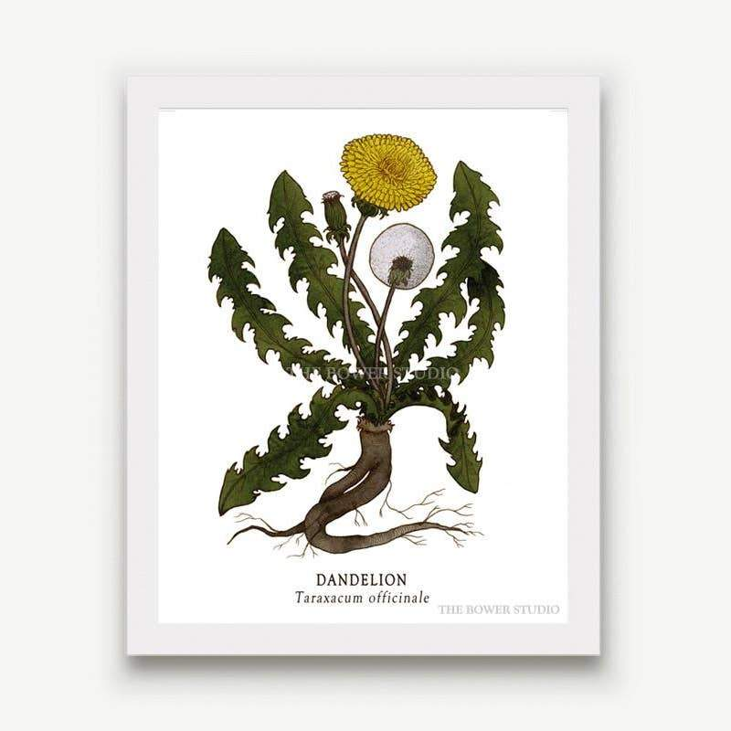 "Botanical Print (8"" x 10"") - Dandelion - The Bower Studio -Freehand Market"