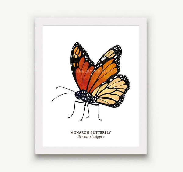 "Botanical Print (8"" x 10"") - Monarch Butterfly"