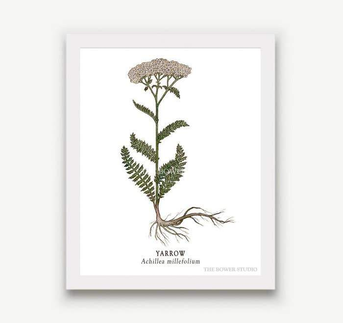 "Botanical Print (8"" x 10"") - Yarrow - The Bower Studio -Freehand Market"
