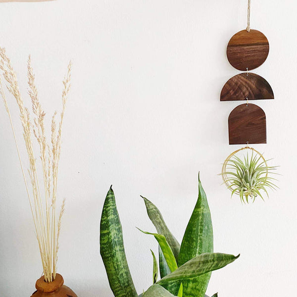 Indie Air Plant Hanger - Wildly Urban -Freehand Market