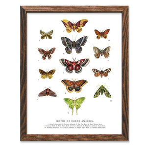Moths of North America Art Print