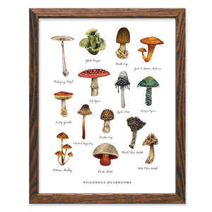 Poisonous Mushrooms Art Print - The Wild Wander -Freehand Market