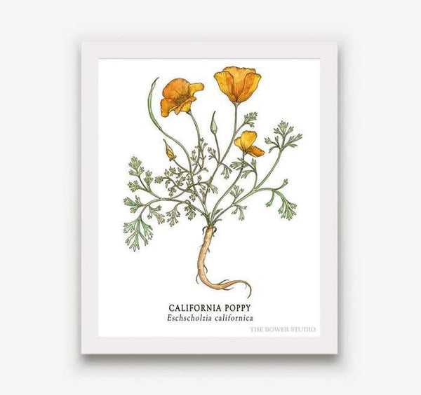 "Botanical Print (8"" x 10"") - Poppy"