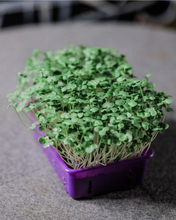 Load image into Gallery viewer, SOLANA GREENS | Microgreens Grow Kit for KIDS