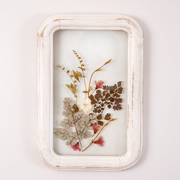 Framed Pressed Botanical Wall Art